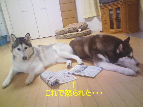 2011102608.jpg