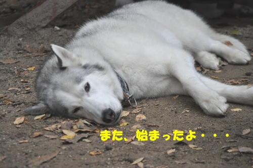 2011111314.jpg