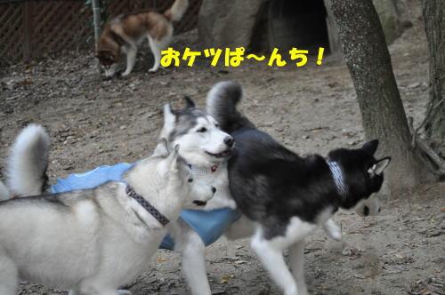 2011111323.jpg