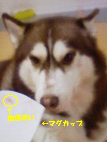 2011120802.jpg