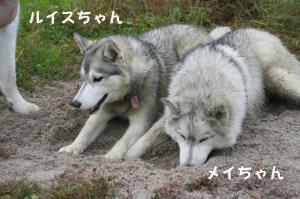 20081116愛知ハスオフ会 135_640