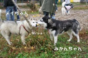20081116愛知ハスオフ会 050_640