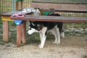 20081116愛知ハスオフ会 115_640
