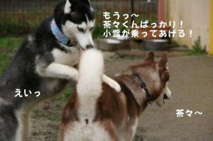 20081116愛知ハスオフ会 094_640