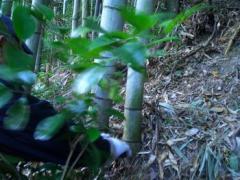 竹取の翁002