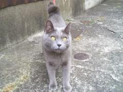 隣の猫ちゃん