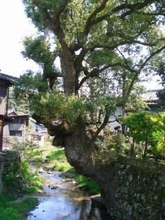 akizuki011