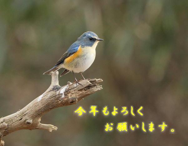 20090101 ruribitaki-o-20080202-3T9E6141