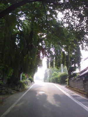 20090628柳