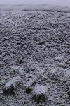 20090201雪