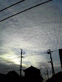 20081230205439