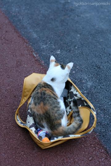 鞄に入った三毛ちゃん。
