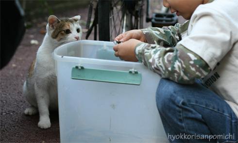 園児と魚とそしてネコ。