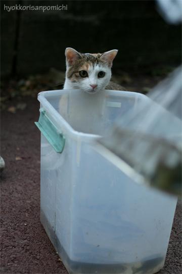 園児と魚とそしてネコ②。