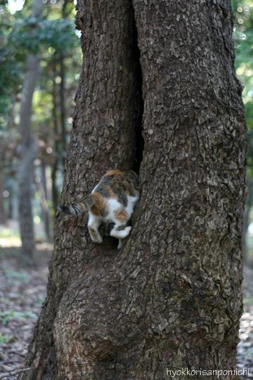 ひらこー木登り1