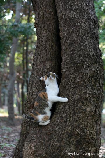 ひらこー木登り2