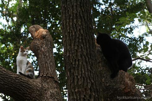 ひらこー木登り、二匹。