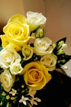 バラ 黄 f