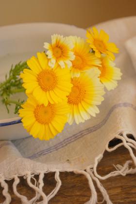 春菊の花 B