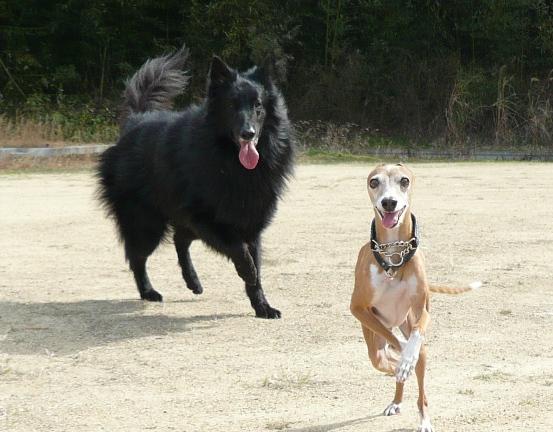 ディオっち、大型犬とも遊べるやん♪