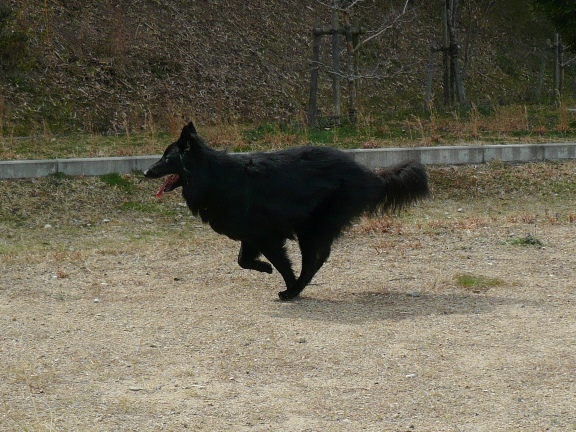 ウキウキと走るホ坊