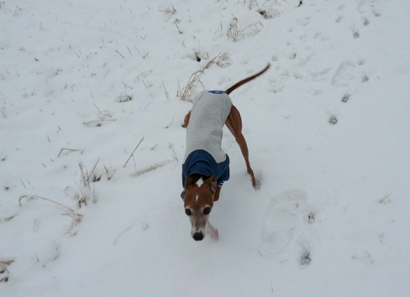 雪に残る足跡が可愛い♪