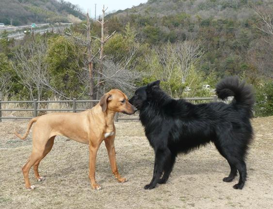 大型犬は、遠くから撮っても大きく写るので、有り難いです・笑