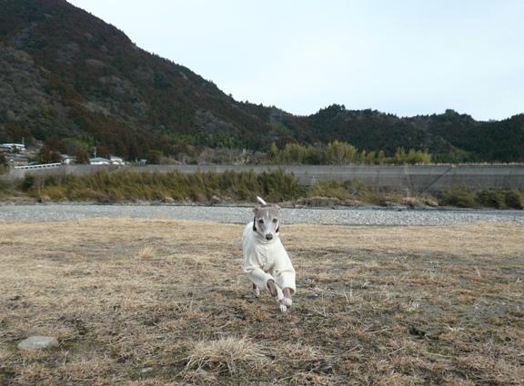 河原じゃ走れなかったので、芝生で爆走タイム。