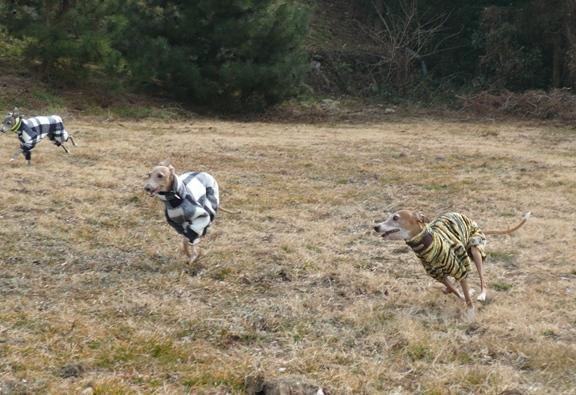 トトも走ってたけど、つるんで走らないのでほぼ写真が無い。。