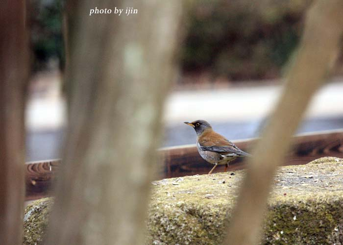 11shiroharaYP_12.jpg