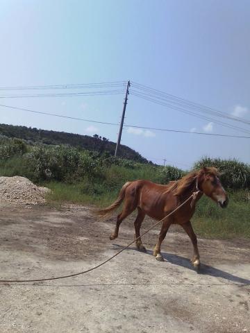 0601馬移動