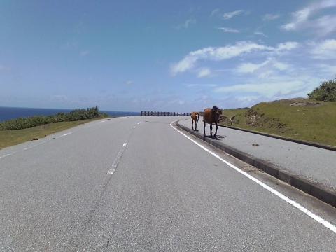 0906馬と台湾