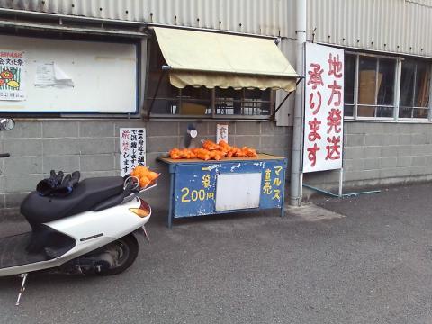 091120ミカン①