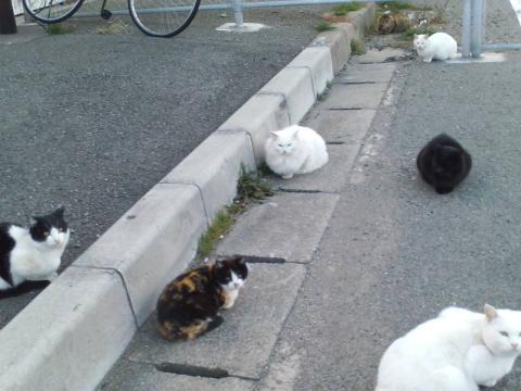 100105猫だらけ