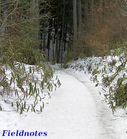 路面が完全に雪に覆われた念仏坂