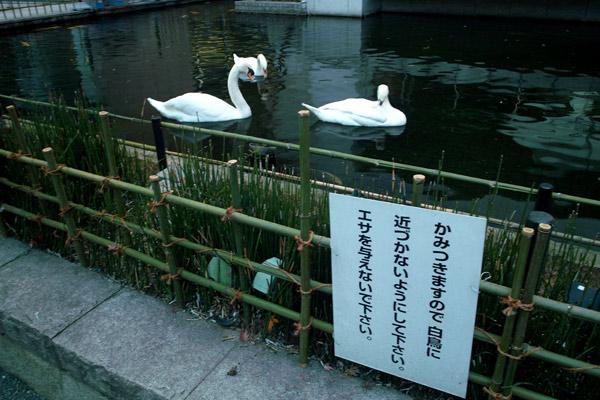 081216rokkakudo005.jpg