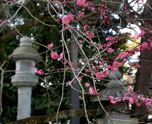 090127kitanotemmanguu027.jpg