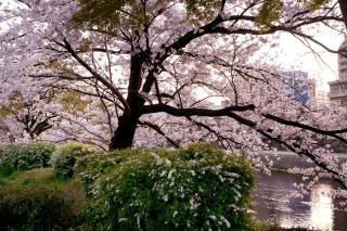090407kamogawa006.jpg