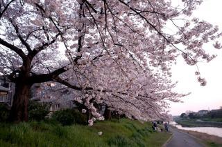 090407kamogawa017.jpg