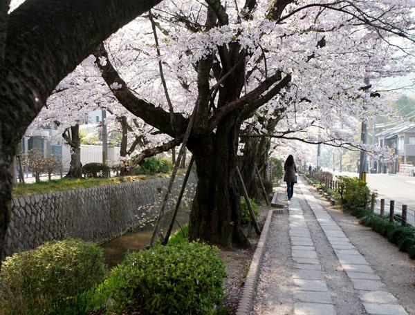 090409tetsugakunomichi001.jpg