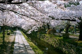 090409tetsugakunomichi002.jpg