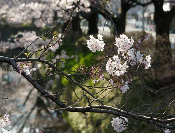 090409tetsugakunomichi004.jpg