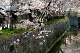 090409tetsugakunomichi005.jpg