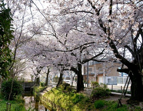 090409tetsugakunomichi006.jpg