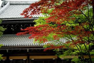 090504nanzenji007.jpg