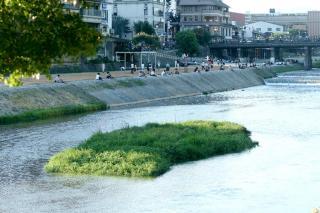 090814kamogawa011.jpg