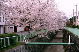 100406kitashirakawa001.jpg