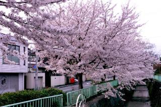 100406kitashirakawa005.jpg