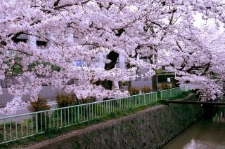 100406kitashirakawa006.jpg