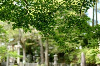 100515miyakehachiman017.jpg